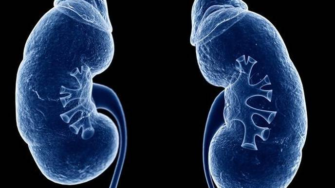 Research Discovers New Way to Slow Progression of Diabetic Kidney Disease