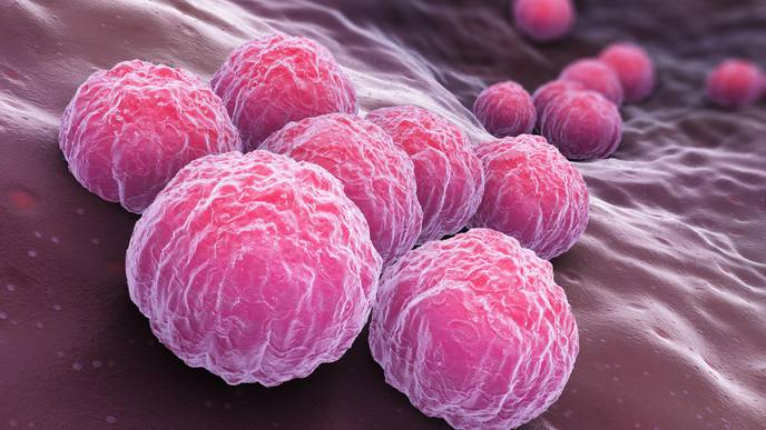 Chlamydia Vaccine Could Become Reality After Successful Clinical Trial