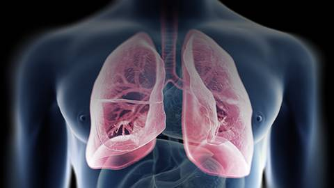 Exploring Advances in Treatment: A Step Forward in Small Cell Lung Cancer