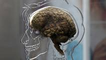 'Brain Map' could Hold the Answer whether Smokers can Quit or Not
