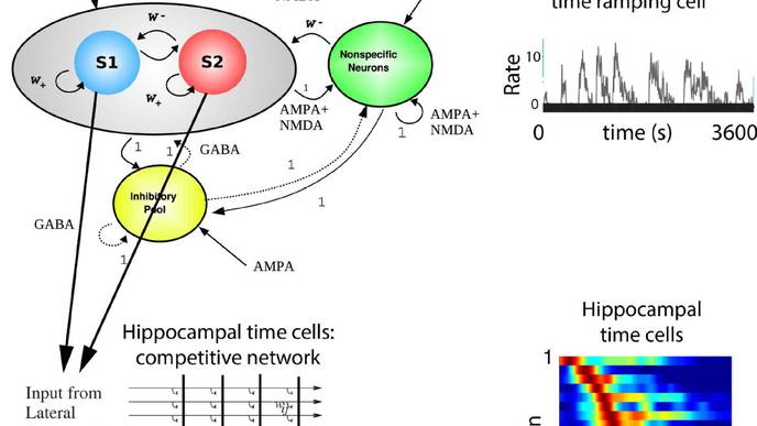 How the Brain Remembers the Order of Events