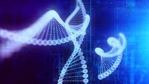 Genetic Tool to Predict Adult Heart Attack Risk in Childhood