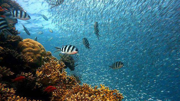 Declining Fish Biodiversity Poses Risks for Human Nutrition