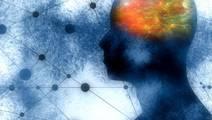 USC Scientists Discover Schizophrenia Gene Roles in Brain Development