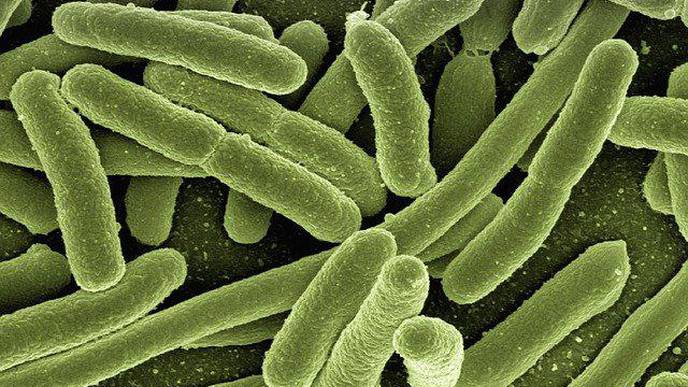 Cysteine Persulfide Found to Be a New Culprit in Antibacterial Resistance