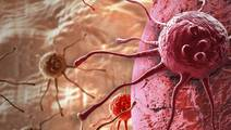 Mechanism That Steers Growth of Cancer Cells in Melanoma & Liver Cancer Found