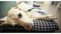 Painkiller Prescriptions for Pets May Be Contributing to Opioid Epidemic