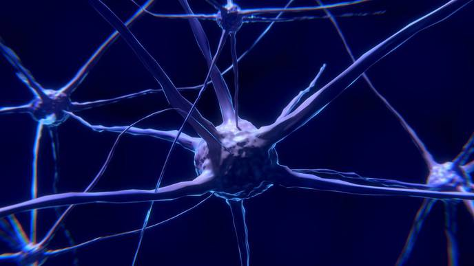 Evidence in Mice That Electroacupuncture Reduces Inflammation via Specific Neural Pathways