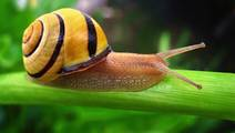 Could Snails Relieve Chronic Pain?