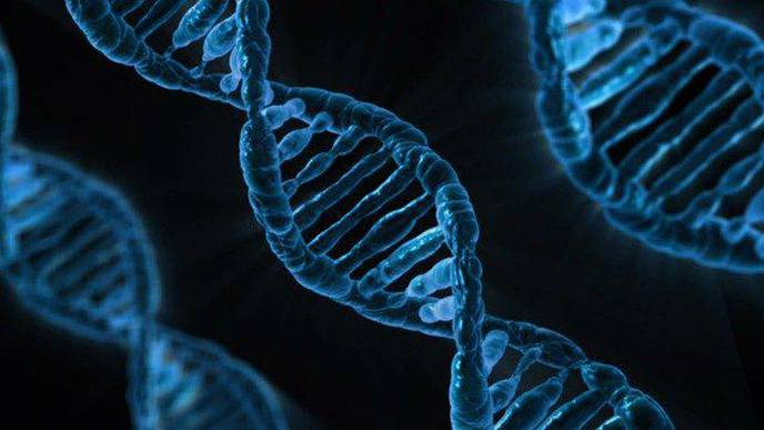 Do People Aged 105 & Over Live Longer Because They Have More Efficient DNA Repair?