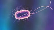 Op-Ed: Engineering Bacteria to Treat Genetic Diseases