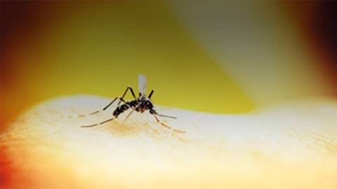 Zika Virus Update: The Family Doc's Guide to Recognition and Treatment