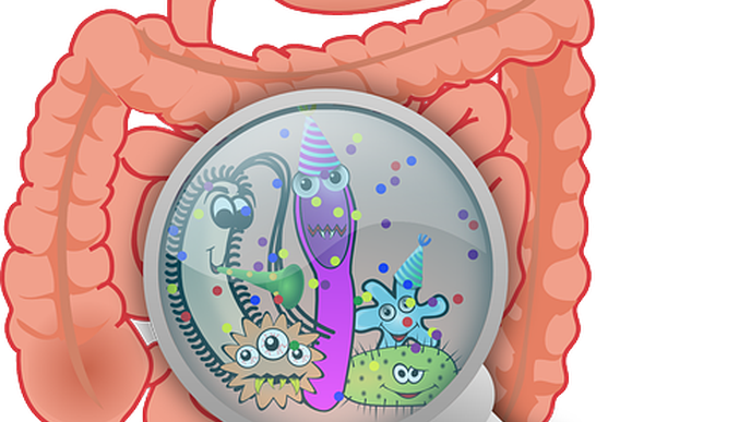 Antiviral Defense from the Gut
