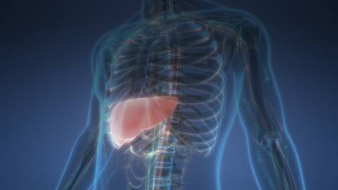 Navigating Non-Alcoholic Fatty Liver Disease: Top Management Strategies to Know