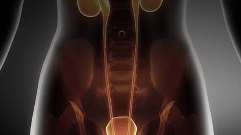 American College of Physicians' Guidelines on Pelvic Exam Screening