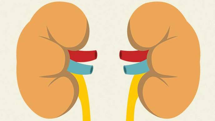 Implantable Artificial Kidney Moves Closer to Reality