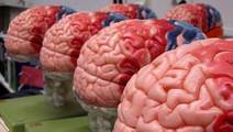 Technique to 'Listen' to a Patient's Brain During Tumor Surgery