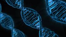 Scientists Provide Insight into Genetic Basis of Neuropsychiatric Disorders