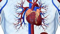 Magnetic Heart Pump Cuts Blood Clots, Stroke Risks in Study