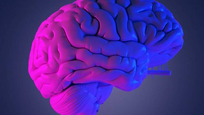 Researchers Generate a Transcriptomic Map of the COVID Brain