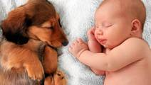 Having a Dog Lowers Allergy and Obesity Risk in Babies