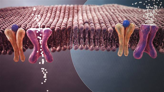 Study Finds Tiny 'Nano' Capsules Effective in Treating Type Two Diabetes