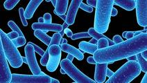 Random Variability May Contribute to Differences in Gut Microbe Populations