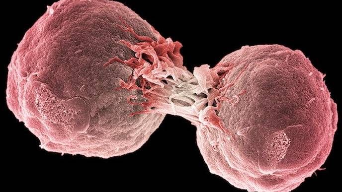 Are We Innately Immune to Cancer?