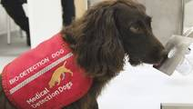 Can Medical Detection Dogs Sniff Out Diabetes?