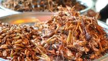 The buzz about edible bugs: Can they replace beef?