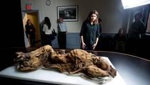 Clues of Heart Disease Found in 16th-Century Mummies