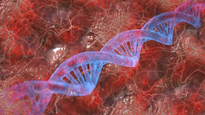 Mothers Can Influence Offspring's Height, Lifespan, & Disease Risk Through Mitochondria