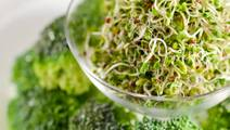 Study: Broccoli Sprout Can Possibly Help Fight Schizophrenia