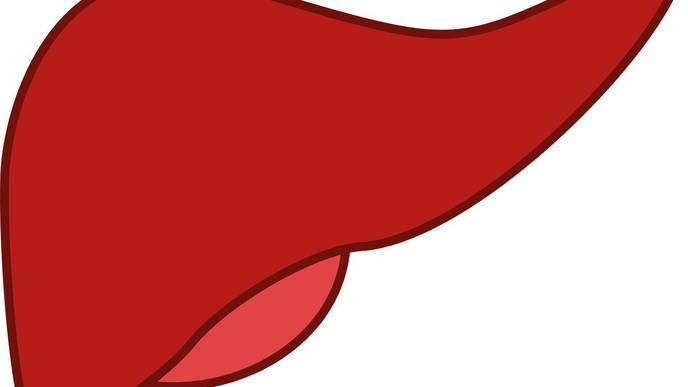 Missing Bile Ducts Offer Clues to Mechanism of Liver Injury