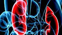 Kidney Transplant Patients with HCV Face Elevated Diabetes Risk