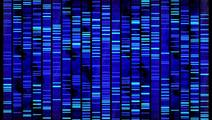 Human Genome Sequenced by Handheld Device