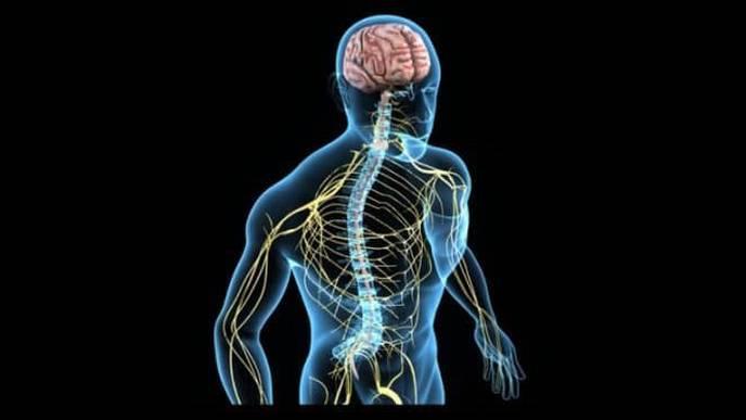 Polymerized Estrogen Shown to Protect Nervous System Cells