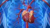 Ultra-Thin Tissue Samples could Help to Understand and Treat Heart Disease