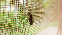 New Bed Net Developed to Help to Fight Malaria