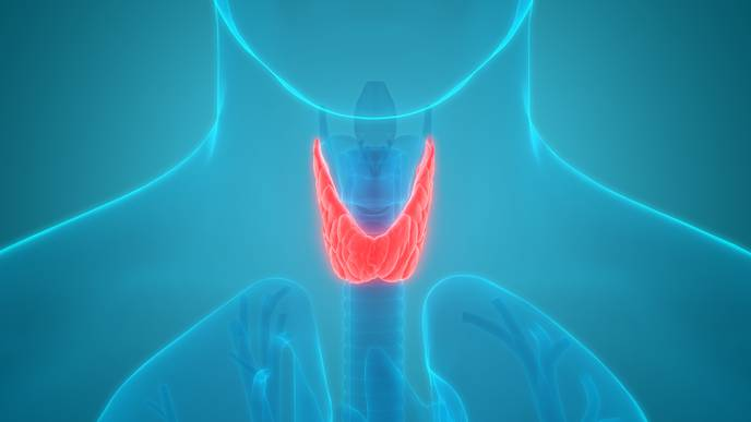 Effects of Subclinical Thyroid Dysfunction on Bone Mineral Density in Adults