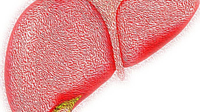 Amino Acid Connected to NAFLD Could Provide Treatment Clues