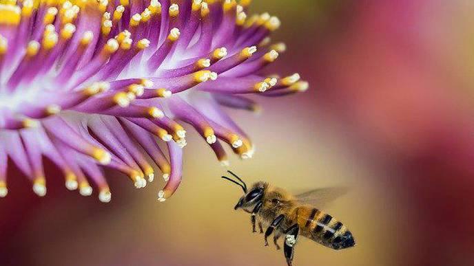 Honeybee Venom Kills Aggressive Breast Cancer Cells