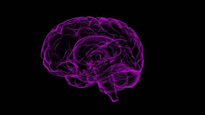Site of Male Sexual Desire Uncovered in Brain