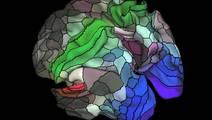 Updated Brain Map Identifies Nearly 100 New Regions
