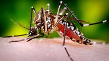 Scientists groom unlikely bacterial ally against Malaria, Zika & Dengue