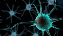 New Study Discovers Neurons That Rewrite Traumatic Memories