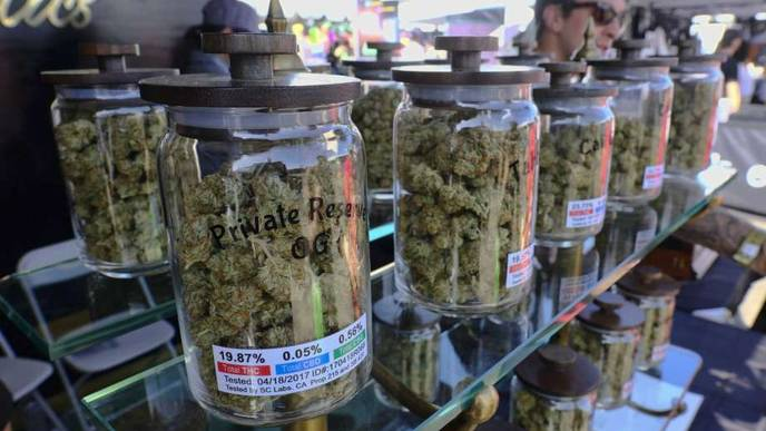 SF Report Weighs Health Risks Raised by Legal Pot