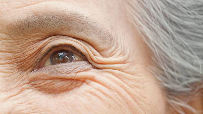 Retinal Imaging Technology for Early Detection of Alzheimer's Disease