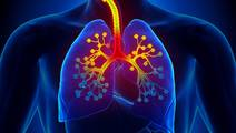 Scientists Discover a New Way to Eliminate Allergen-Induced Asthma Attacks