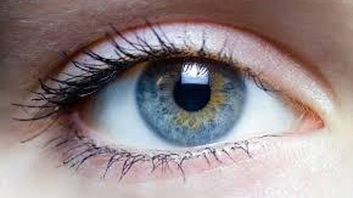 Scientists Rescue Mini Retinas from Eye Disease Via New Gene Therapy Approach
